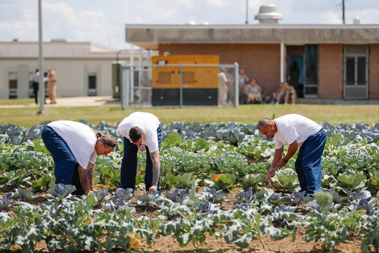 Offenders plant seeds in a garden located inside the Plainfield Correctional Facility, on Thursday, July 11, 2019. This is the second year for the program, which has so far donated 395 pounds of vegetables grown by the offenders. Left to right: Michael Meade, Josh Phillips, middle, and Migel Sandol.