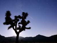 Joshua trees, monarch butterflies among species that may be impacted by Endangered Species Act change