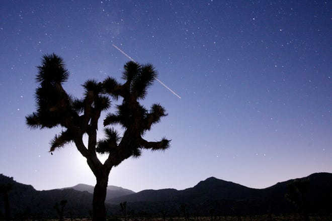 A Joshua tree is silhouetted by the moon as a plane flies overhead at Joshua Tree National Park early morning on Monday, August 11, 2008 in Joshua Tree.