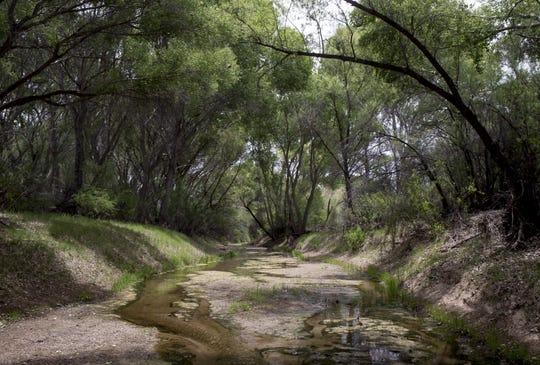 The San Pedro River, May 9, 2019, on Three Links Farm near Cascabel, Arizona.