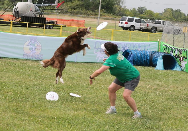 Danielle O'Niell,, of Team ZOOM, and canine super star, Ratchet, perform some Frisbee tricks for spectators at the Ottawa County Fair.