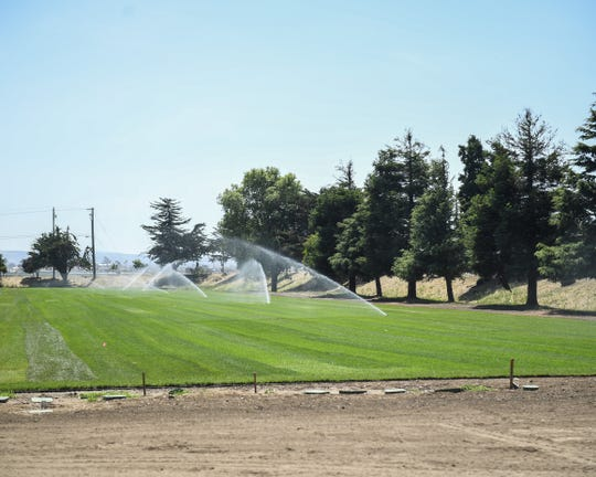 The first grass laid down on the renovated fields at the Salinas Regional Soccer Complex gets watered on June 17, 2019 as the first roots set in.