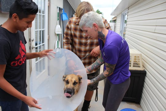 Emanuel, left, an Indian River County Boys & Girls Club member, helps Jennifer Moyer put a preventative cone on a dog to prevent it from scratching a wound. Moyer is a veterinarian technician at H.A.L.O. No-Kill Rescue.