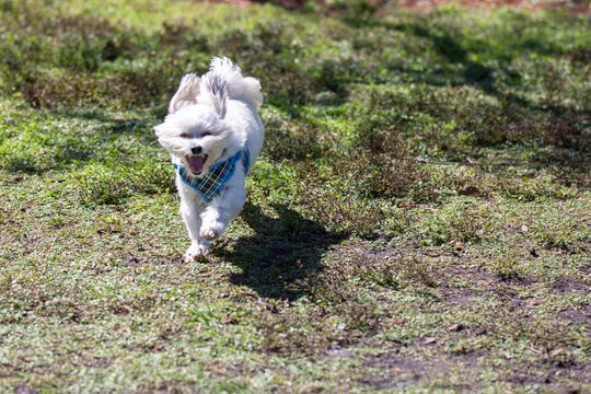Port St. Lucie's newest dog park will open Aug. 3 at McChesney Park in St. Lucie West.