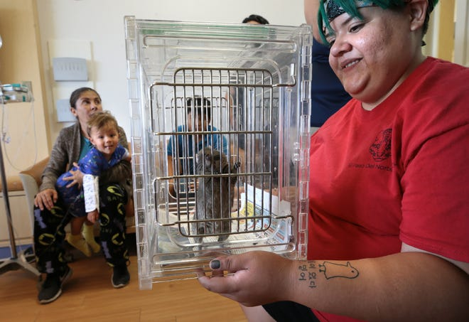 El Paso Zoo Education Specialist Vanessa Soto holds a rat during the zoo's visit Wednesday, July 17, 2019, to the El Paso Children's Hospital.