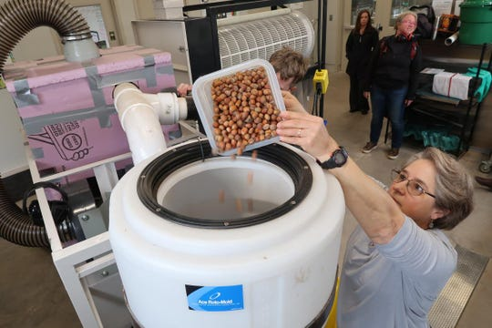 Ariadna Chediack, with the University of Wisconsin-Extension, pours hazelnuts into a machine to process them at Northland College.