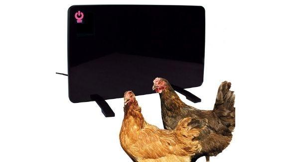 Weidest Amazon Deals: Chicken Coop Heater