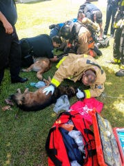 Palm Bay firefighters and police treat dogs that were rescued from a burning house on Altamira Street.