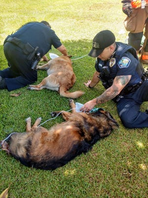 Palm Bay police officers use oxygen masks to treat dogs that were rescued from a burning house on Altamira Street.