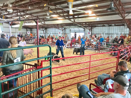 Among the many 4-H project animals showcased all this week as part of the Ottawa County Jr. Fair, one of the divisions with the deepest roster in terms of quality and showmanship was that of the hogs in the middleweight barrow raised by girls from several 4-H clubs throughout the county.
