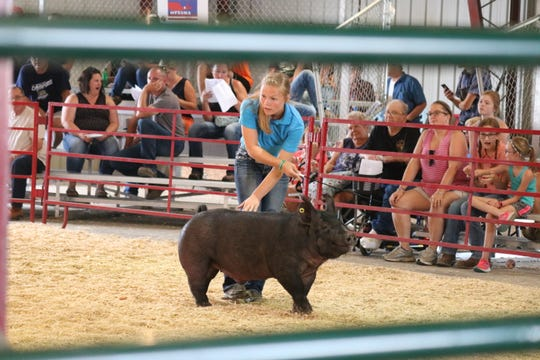 Olivia Rahm, a member of the Country Kids club in Graytown, earned her hog here the first place championship spot for the middleweight division.