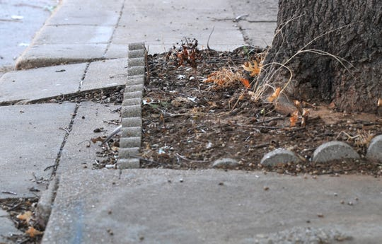 In this file photo from 2018, Wichita Falls downtown sidewalks near tree roots show signs of needing repairs as the city makes plans to place the repair cost on nearby business owners.