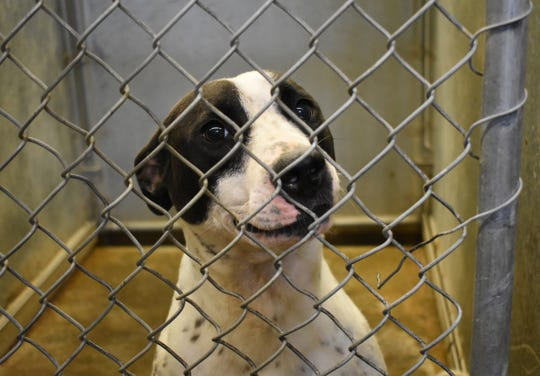 The Muskingum County Commissioners rejected the bids for a new dog pound, as the bids came in well over the Commissioners requested $500,000.