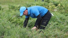 Northern Ireland's Rory McIlroy looks for his ball in the long rough on the 1st hole during the first round of the British Open Golf Championships at Royal Portrush in Northern Ireland, Thursday, July 18, 2019.(AP Photo/Peter Morrison) ORG XMIT: XAG159