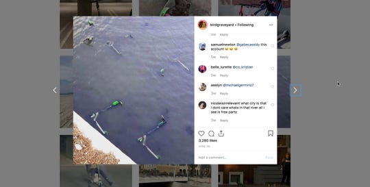 An Instagram account shows dumped Bird scooters in the water
