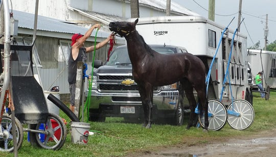 A race horse is cooled down Friday at the Crawford County Fair. Harness racing scheduled for Thursday night was postponed until Friday morning because of rain.
