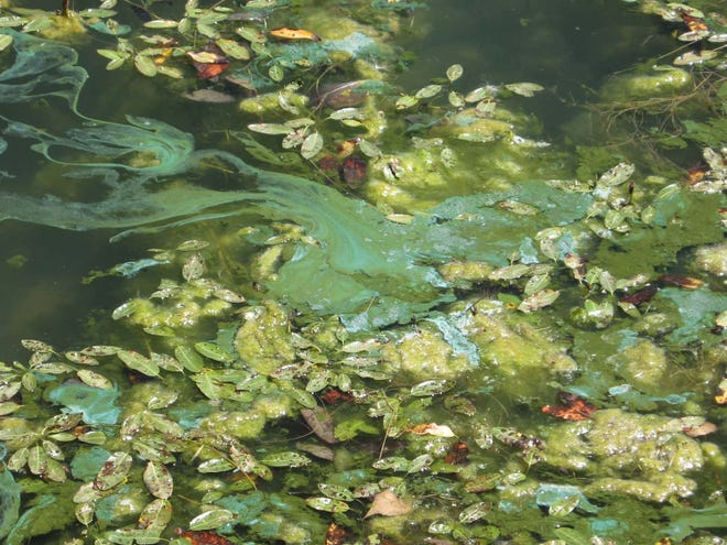 Blue-green algae has been spotted in Timnath Reservoir this summer.