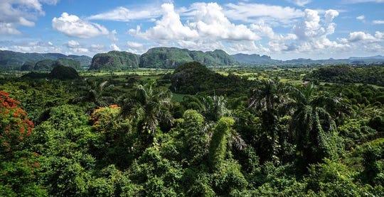 Viñales Valley, Cuba, the home to Cuba's world-class tobacco farms.