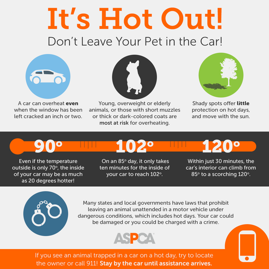 "Running into the store for ""just a minute"" can be fatal for pets left in the car."