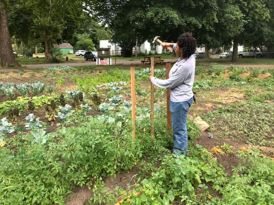 Talesha Dokes, 34, is renting a parcel of land at the Foster Garden in Lansing, 519 S. Foster Ave. She's originally from Arkansas and grows tomatoes, okra and other vegetables.