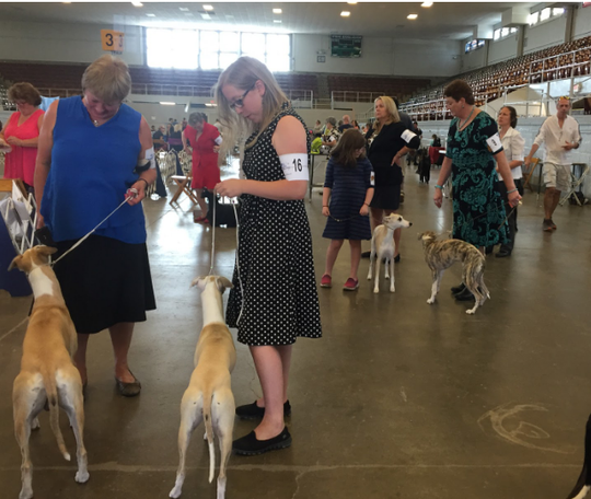 Handlers and their dogs wait their turn at a previous Harding Classic Dog Show. The 2019 Harding Classic Dog Show begins at 8 a.m. on July 28 at Veterans Memorial Coliseum. Admission is free and parking is $5.