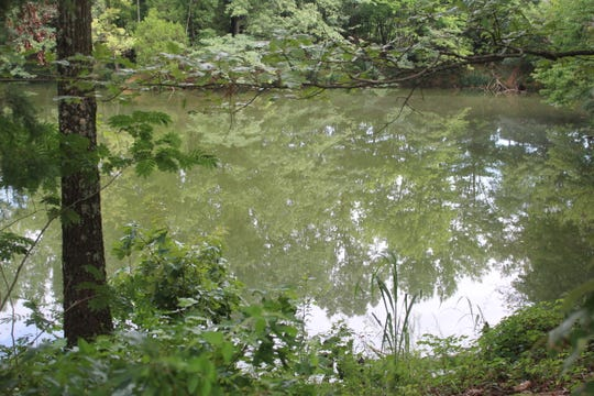 A pond where the body of a male was found on Friday morning by Memphis police. The cause of death has not been determined.