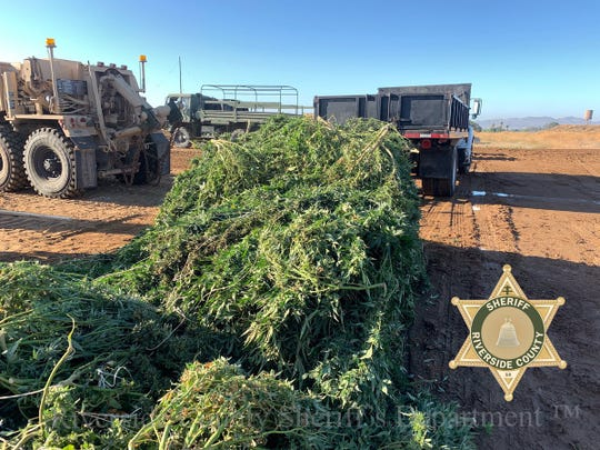 Some of the tons of marijuana plants seized in raids on illegal grow sites on Thursday, July 18, 2019, were photographed by sheriffs officials. In all, 56 search warrants were executed in the Perris area, 49 people were arrested, 71 firearms seized and nearly 48 tons of illegal marijuana confiscated.