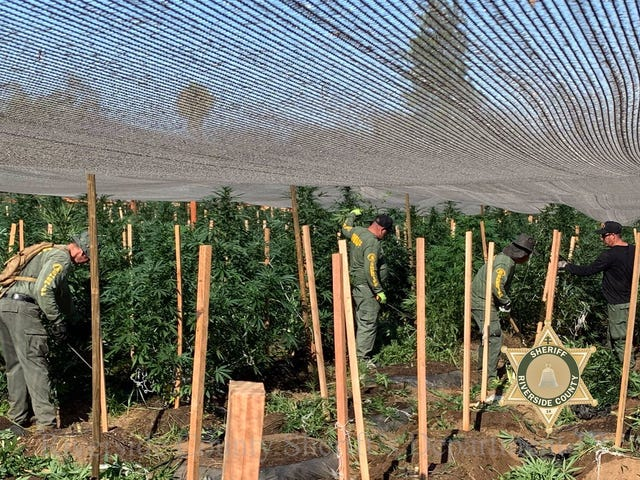 Nearly 48 tons of weed seized, 49 arrested in Perris-area raids
