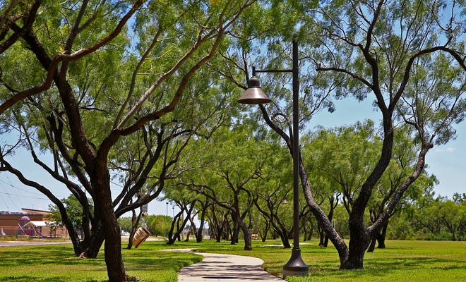 Shade trees line a walking trail in Producers Park.
