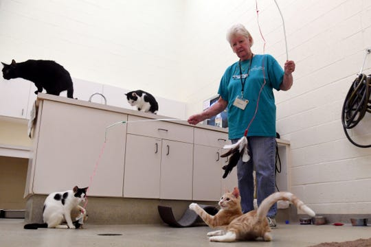 """Mary Robins, who volunteers four days a week  at the Humane Society of Vero Beach & Indian River County, spends time socializing with group of cats up for adoption on Friday, July 19, 2019. The shelter is currently holding a flash sale on kittens for half off the original adoption price and all fees waived on cats 7 months and older. """"Seasonally, depending on where you are geographically, kitten season can start as early a February or March and can go all the way to October or November,"""" said Kate Meghji, executive director of the shelter. """"Here in Florida it never gets cold so cats don't really stop reproducing. The warmer it is and the more resources there are, they just over-produce based on the overwhelming amount of resources."""" All the cats are medically checked, spay or neutered and microchipped. The sale ends on Sunday."""