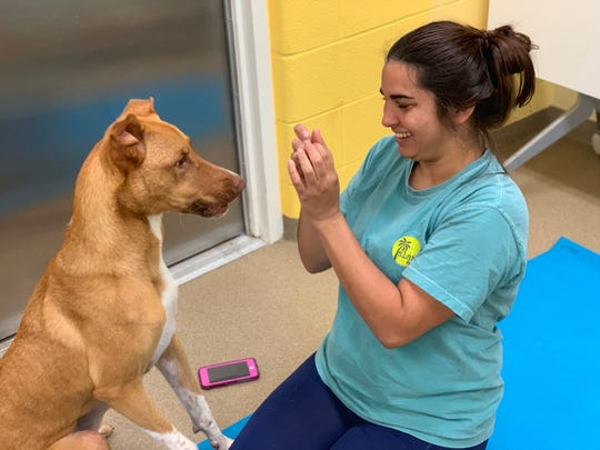 A dozen animal lovers from the Coastal Bend participated in Pups and Poses, a dog-themed yoga event at the Gulf Coast Humane Society on Saturday, July 20, 2019.