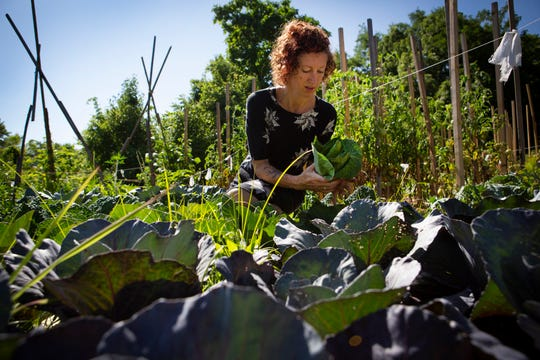 Erin Lockridge picks cabbage out of her garden in Norwood, Ohio, on Friday, July 12, 2019.