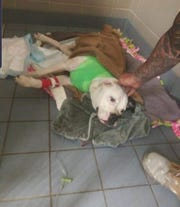 A dog that was allegedly shot by a neighbor was treated at a veterinary office and is doing well.