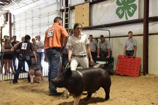 Natalie Goldfuss, the fair's top dairy cow showman, competes in the swine portion of the Showman of Showmen contest.