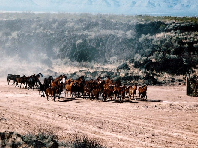 The rescue of nearly 2,000 free-roaming horses from the White Sands Missile Range in 1995 by a team led by Dr. Don Hoglund remains a significant chapter in the history of wild horse management in the United States.