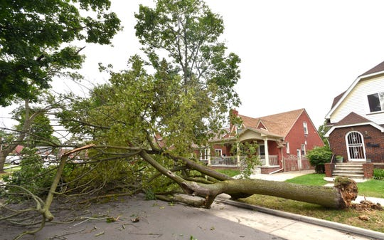 This tree, uprooted by Saturday night's storms, lies across Bertram between Theisen and Middlepointe in Dearborn.