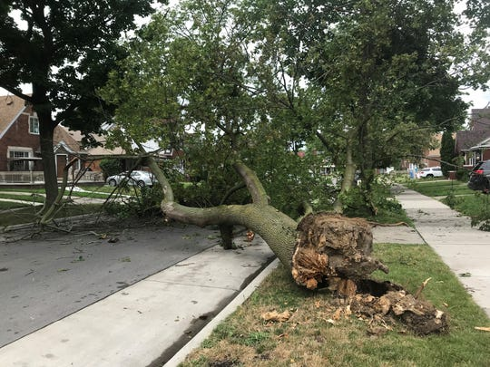 A fallen tree blocks off the 10400 block of Bertram in Dearborn.