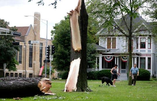 Lori and Keith Hansen walk their dog Kodi past a fallen tree in City Park in Appleton this summer.