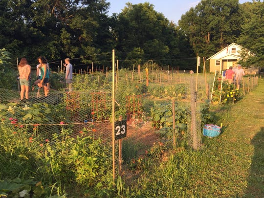 Gardeners visit their plots and socialize in the new community garden in Anderson Township.