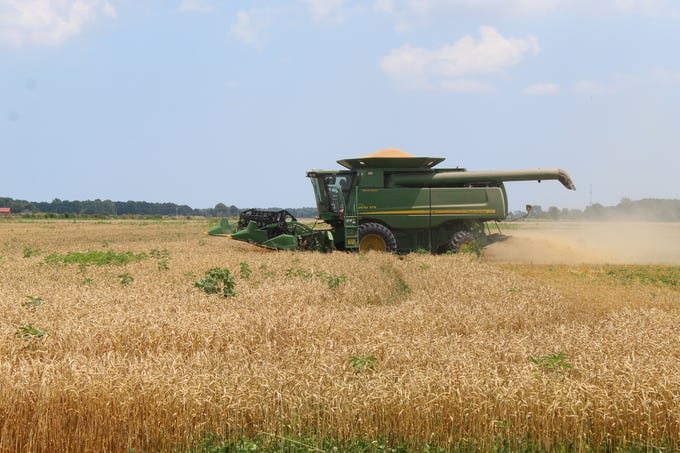 Few Ottawa County farmers were able to plant and harvest a full wheat crop this year, due to poor weather conditions and wet soil. Officials estimated that the county's wheat farmers suffered 80-to-90 percent losses.
