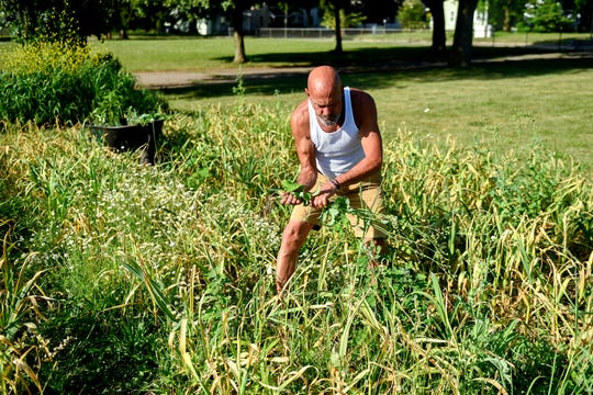 Volunteer David Morey pulls weeds from garlic plants grown in Lansing's Riddle Elementary School Garden. Community groups hold cookouts at the school to boost interest about gardening.