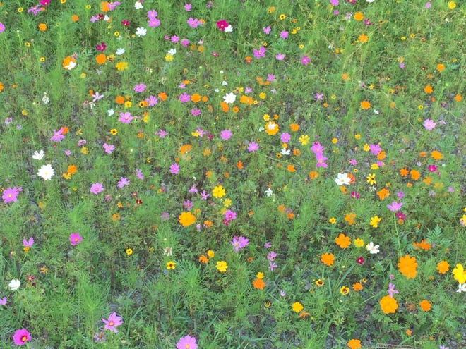 Wildflowers are planted in the median of U.S. 19 in southern West Virginia.