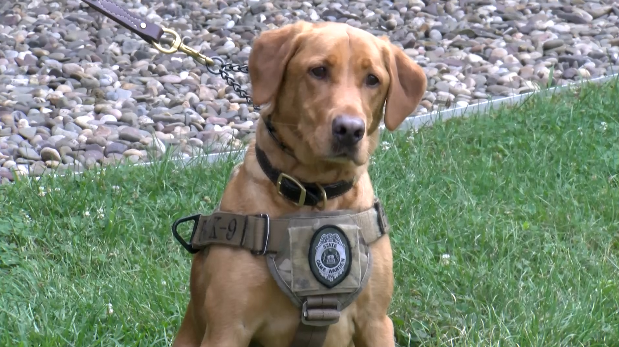See how this Pa  Game Commission K-9 tracks down poachers and other  violators