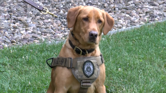 In a demonstration, a Game Commission K-9 retrieves a shell casing and duck wing that showcased its ability to help game law investigations.