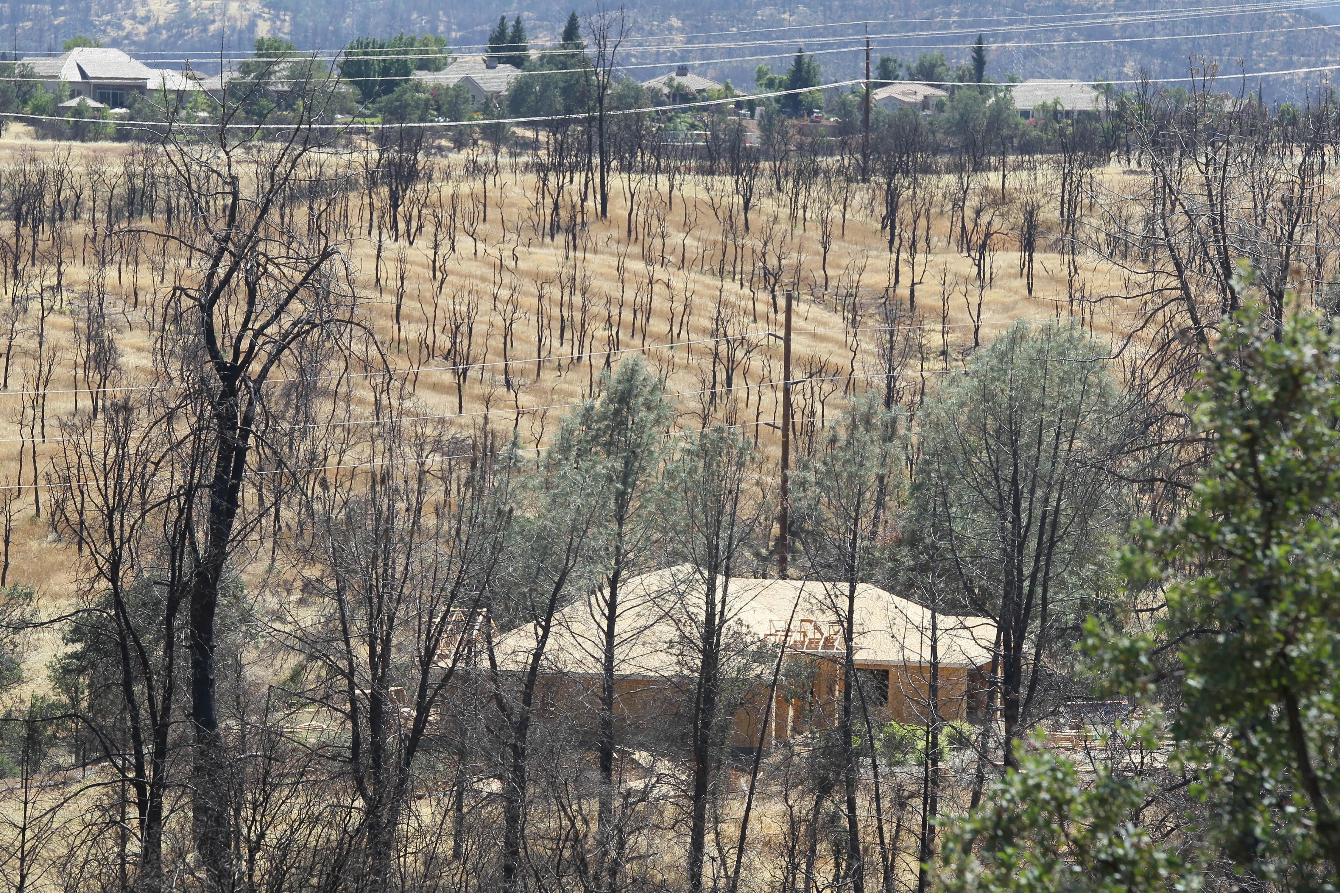 A section of woodland nearly a year after the Carr Fire burned the area near River Ridge Terrace subdivision in Redding.