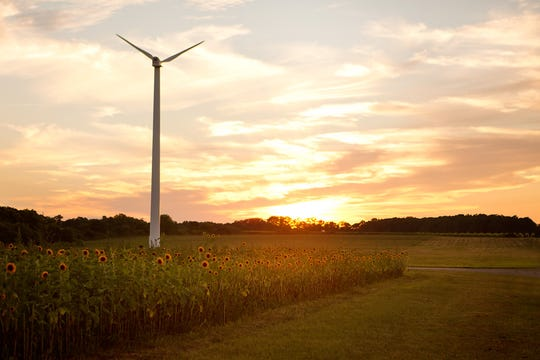 The iconic sunflower field and wind turbine at Pindar Vineyards on Long Island.