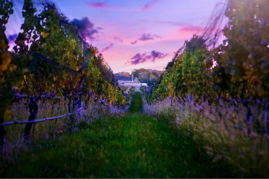 Marcari Vineyards is on New York's Long Island.