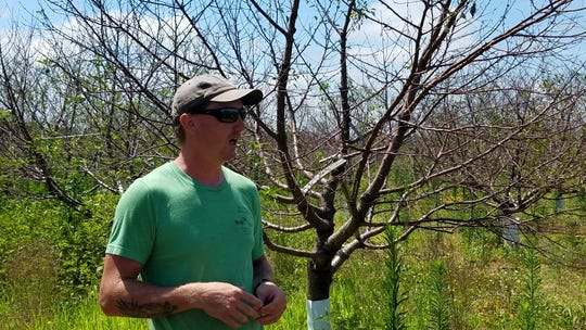 Luke Steffen stands in the cherry orchard on his parents fruit farm at Fort Atkinson, thankful that the family still can offer blueberries for sale.  They are also providing cherries for customers as always but they are not grown on the Steffen's farm because of last winter's freezing.