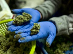 Doctors and patients are flying blind as medical marijuana use rises, research lags