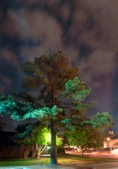 "FILE - In this April 20, 2010, file photo, clouds surround the ""Moon Tree,"" a loblolly pine propagated from a seed that orbited the moon with Apollo 14 astronauts in 1971, and is now a stately tree growing in the Athens-Clarke County Planning Department parking lot in Athens, Ga. Five trees planted in New Mexico from seeds taken to the moon during the Apollo 14 and given to the state by NASA have all died or been forgotten, according to officials at the locations where the trees were planted decades ago."